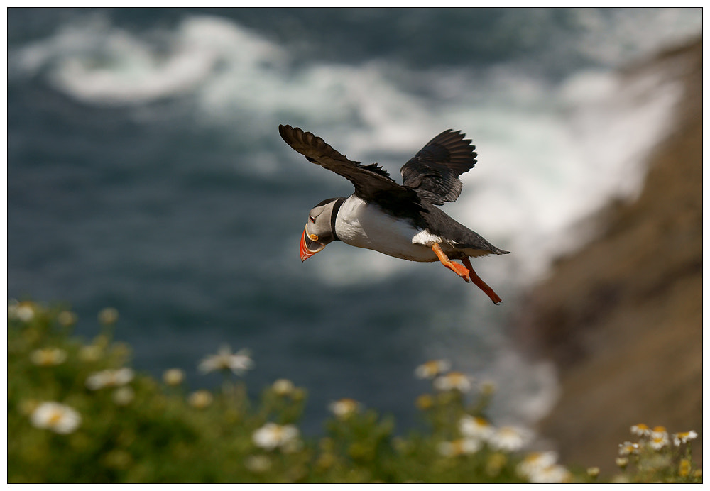 Photograph Landing by Geoffrey Baker on 500px