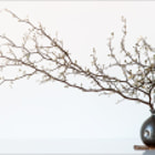 ������, ������: Vase With Branch
