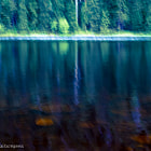 Black Forest Reflections