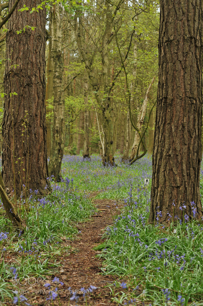 Photograph Bluebell Wood by Elliott  Gill on 500px