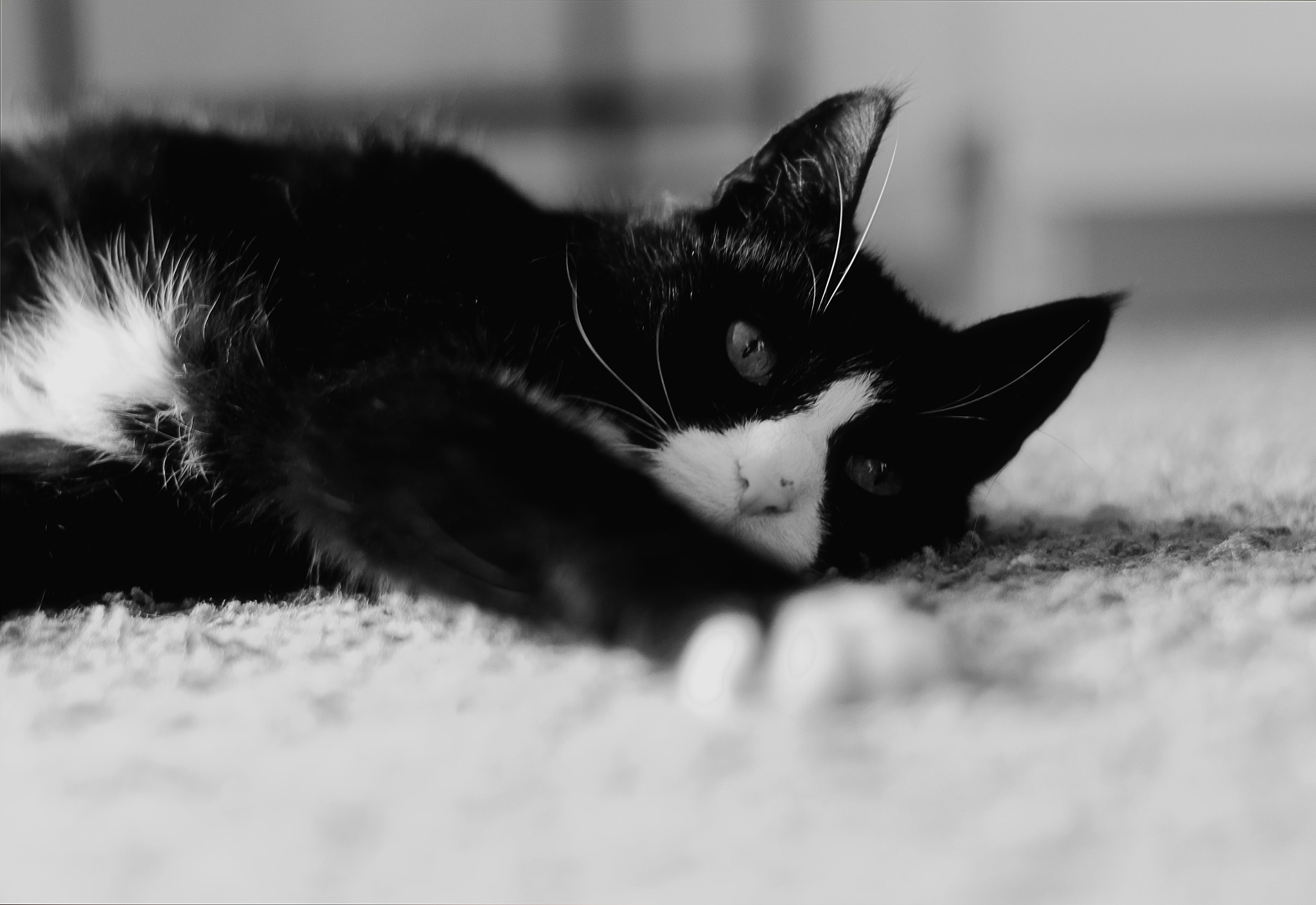 Photograph Cat by Christian Lindemann on 500px