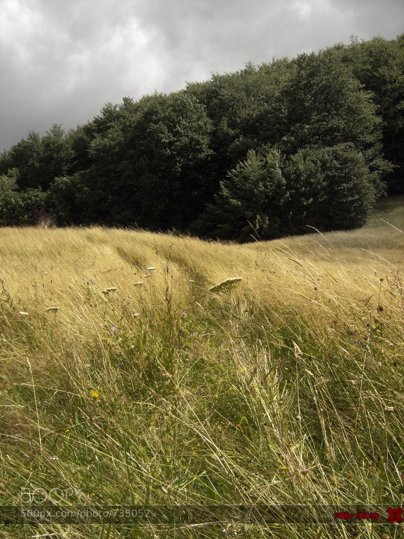 Photograph Field by Malice Bathory on 500px