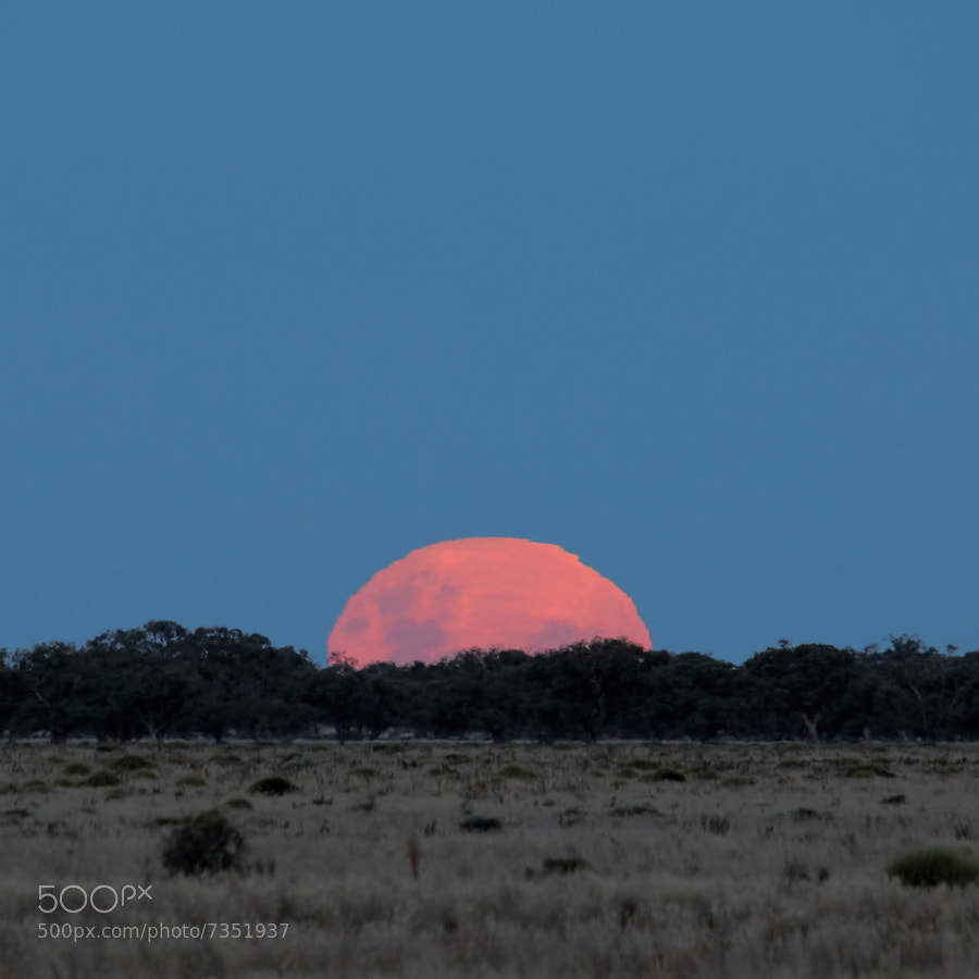 Photograph Super Moon Rising by Mark Cooper Photography on 500px