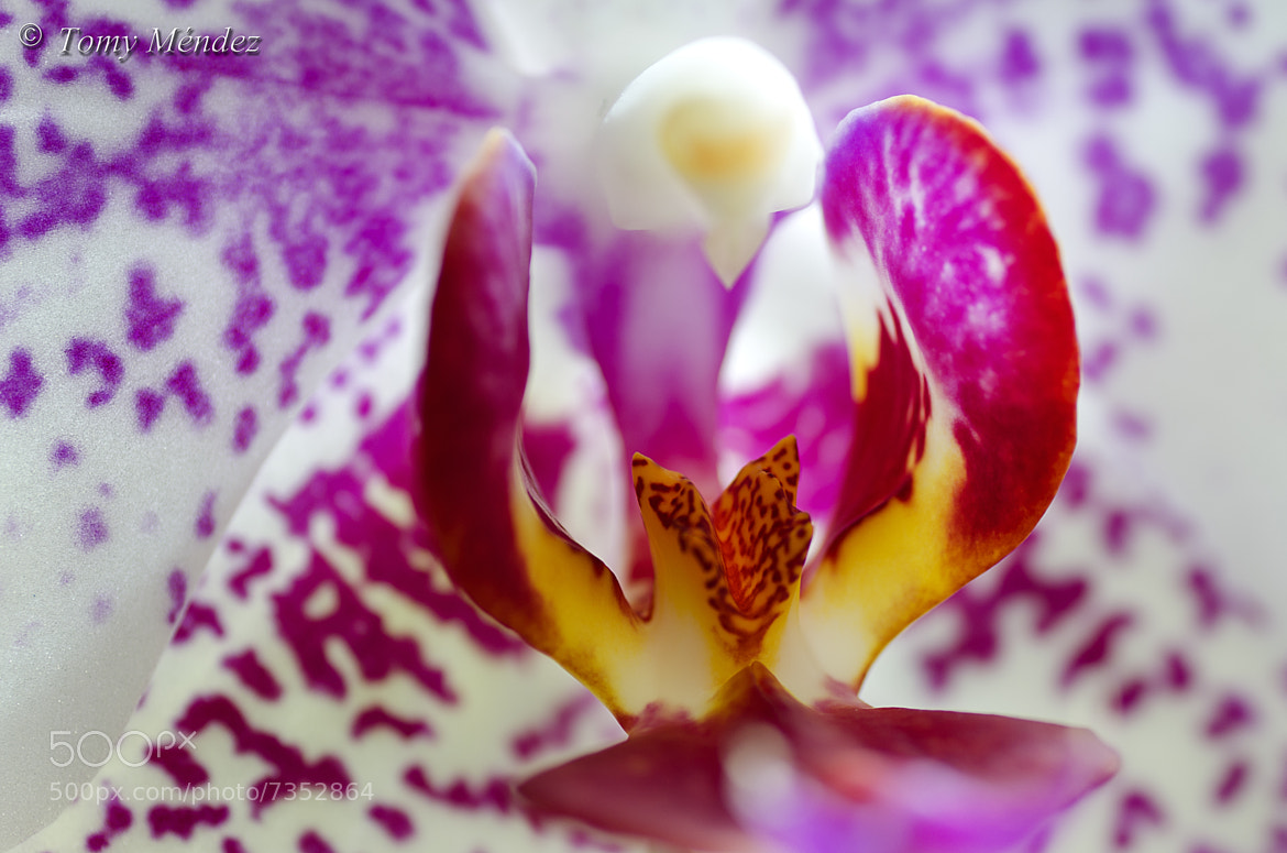 Photograph Orquidea 001 by Tomy Méndez on 500px