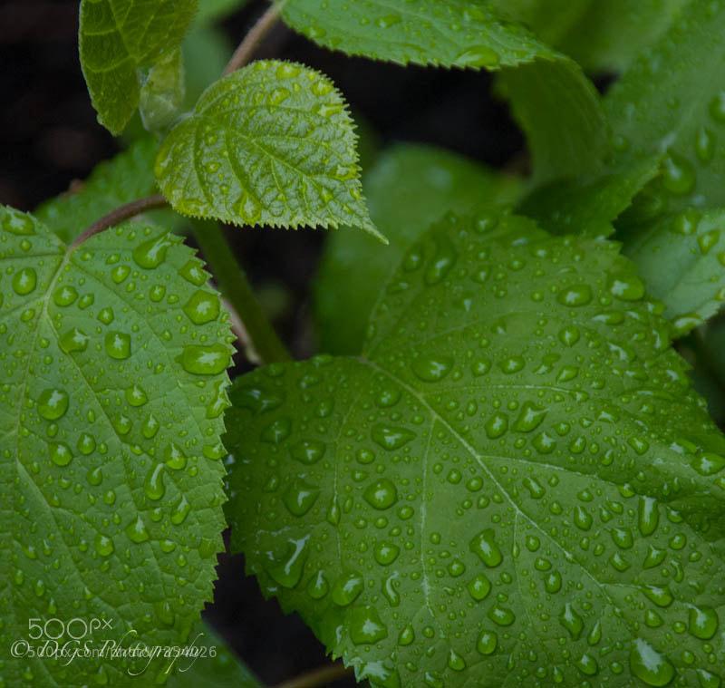 Day 7 - Rain Drops