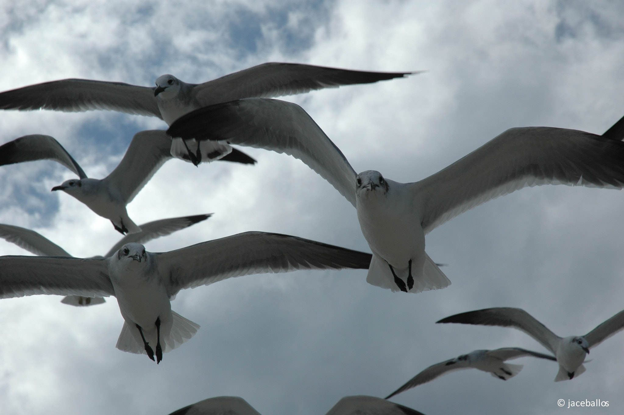 Photograph Gaviotas by Jorge Andrés Ceballos on 500px