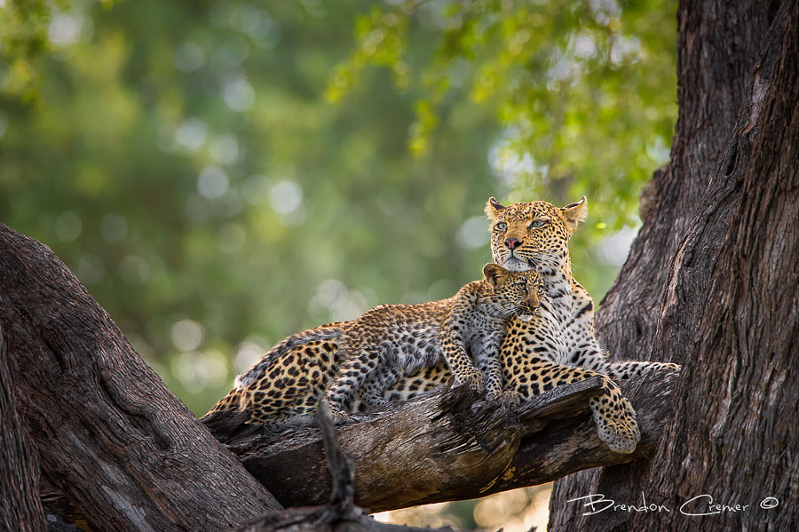 Photograph Tender Loving Care by Brendon Cremer on 500px