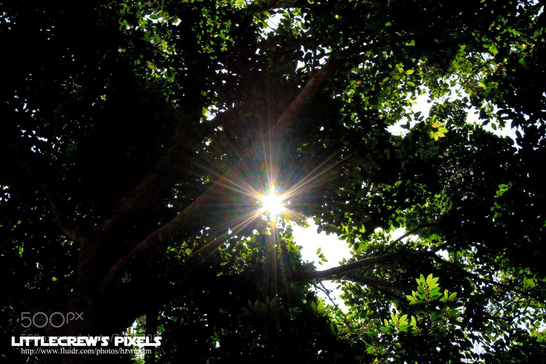 Photograph Sun's Flare by Hazwan Dimmak on 500px