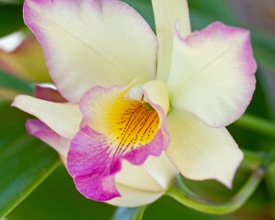Photograph Orchid by Mike Oberg on 500px