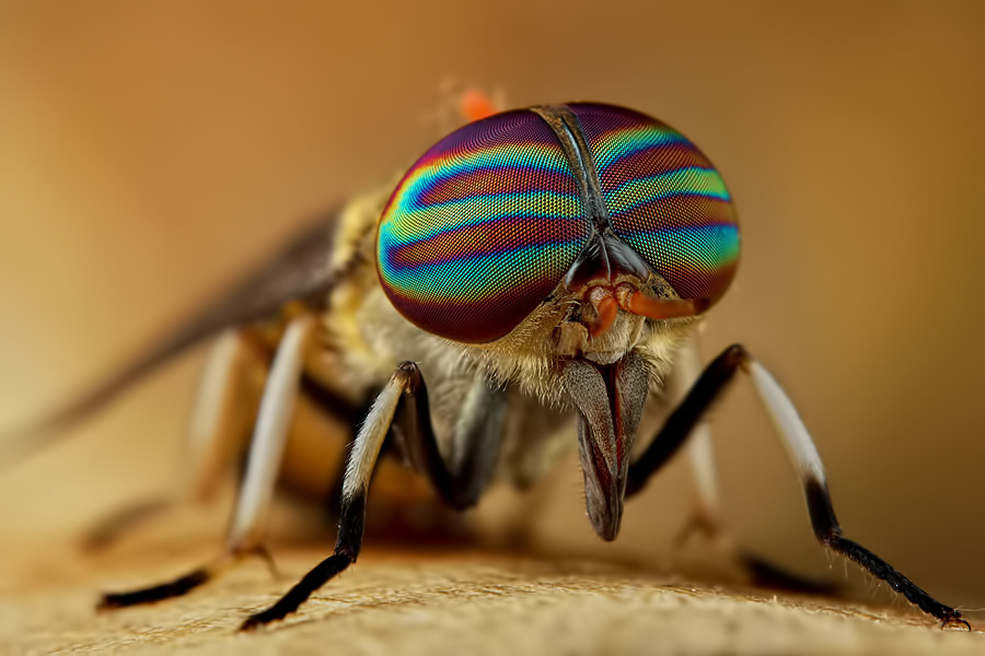 Photograph Stripped-Eyes by Danniel Partogi on 500px