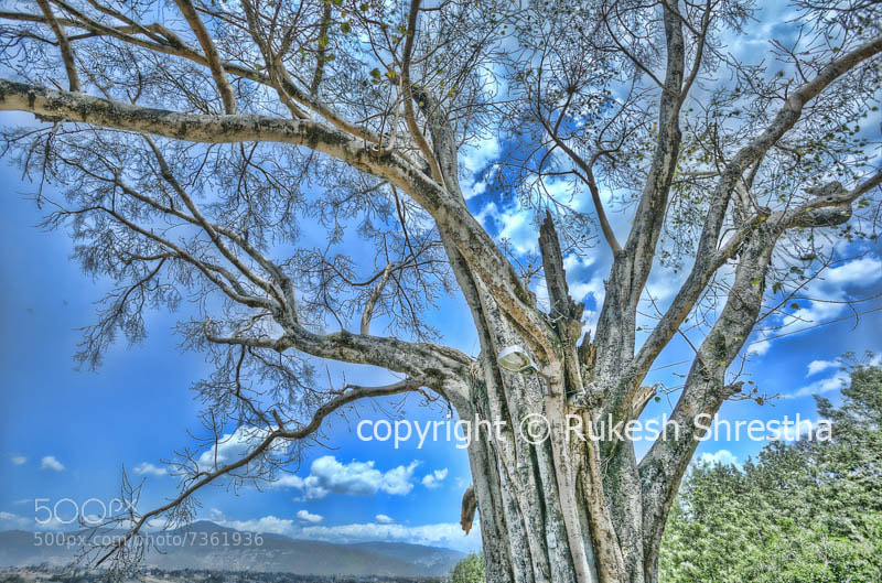 Photograph Tree by Rukesh Shrestha on 500px