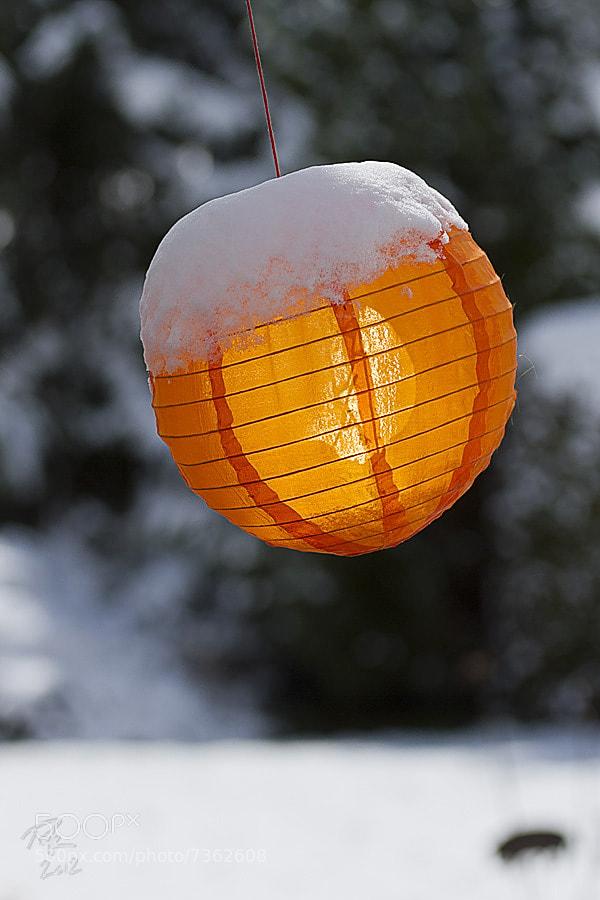 Photograph sun-lit lantern by Benno Pütz on 500px