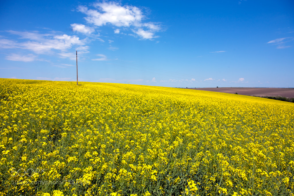 Photograph Rapeseeds field by Vladislav Orachev on 500px