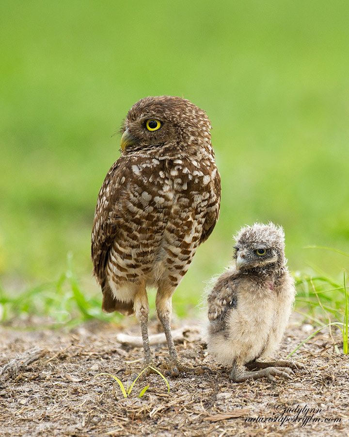Photograph Helping Dad Guard The Hole by Judylynn Malloch on 500px