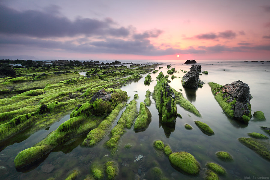 Photograph Green chaos by Iñaki Bolumburu on 500px