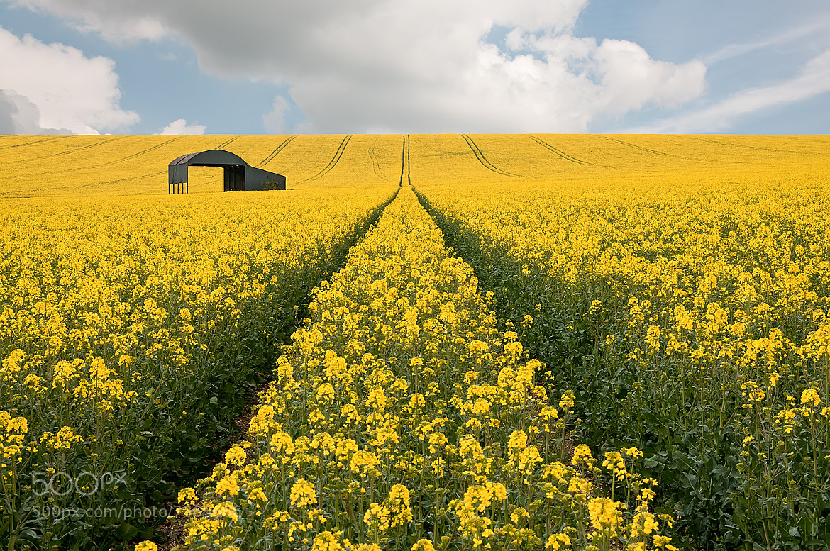 Photograph Black & Yellow by Sean Driscoll on 500px