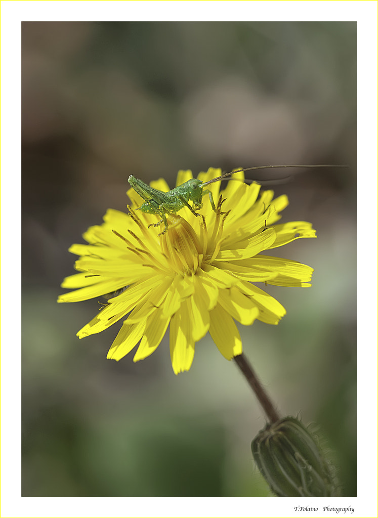 Photograph Green on yellow by Tomas Polaino Artiaga on 500px