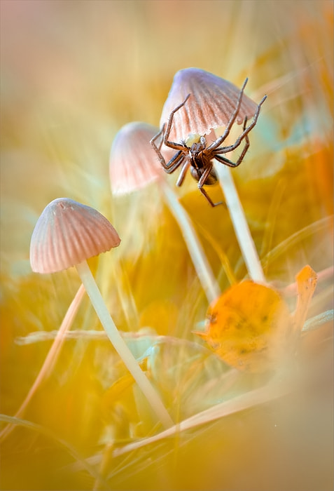 Photograph Story from the forest II by Magda Wasiczek on 500px