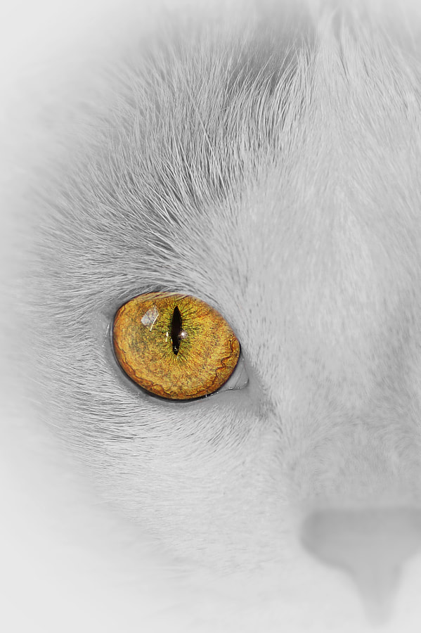 Amber Eye by Cherylorraine Smith on 500px.com