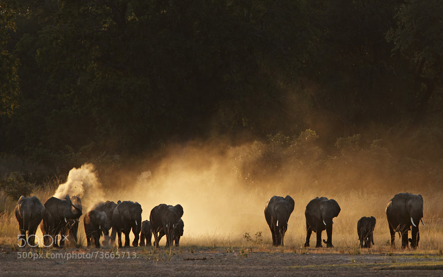 Photograph Elephants by Stephan Tuengler on 500px