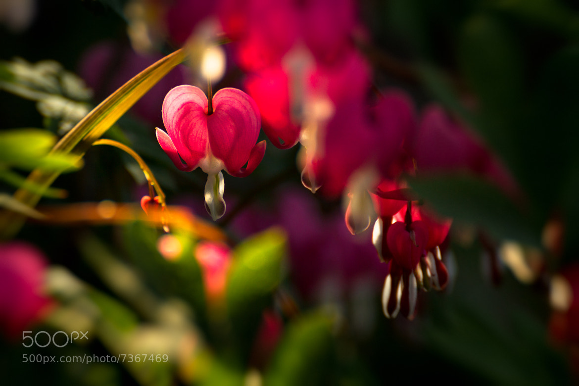 Photograph colors of spring by Scott Stringham on 500px