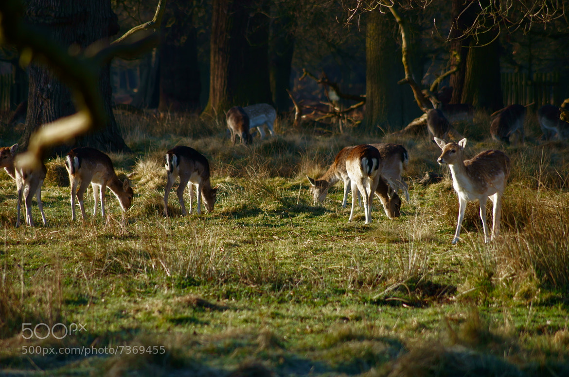 Photograph Dunham Massey by Kate Bolton on 500px