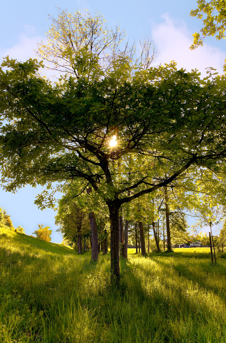Photograph sunshine tree by Daniel Beck on 500px