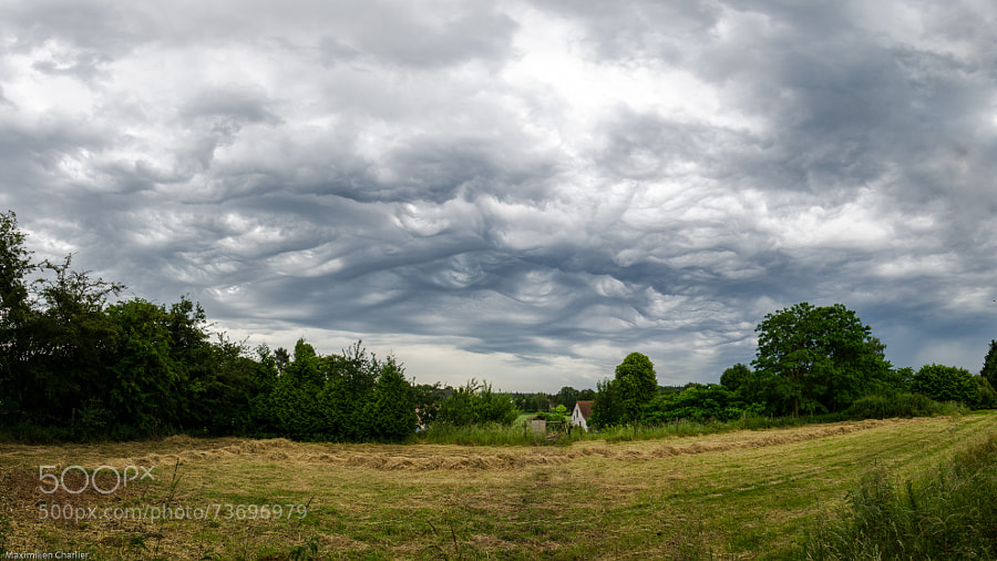 Photograph Asperatus undulatus by Maximilien Charlier on 500px