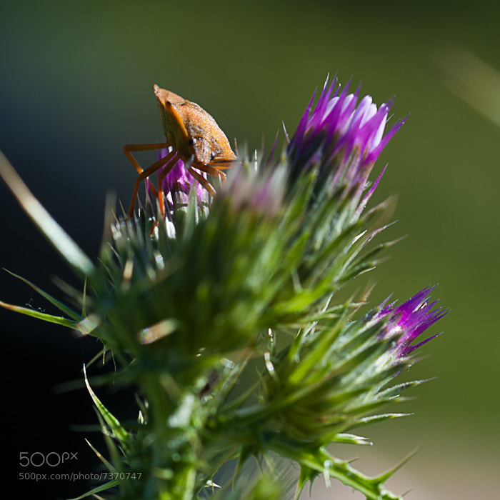Photograph Macro by Juan Carlos Aragonés on 500px