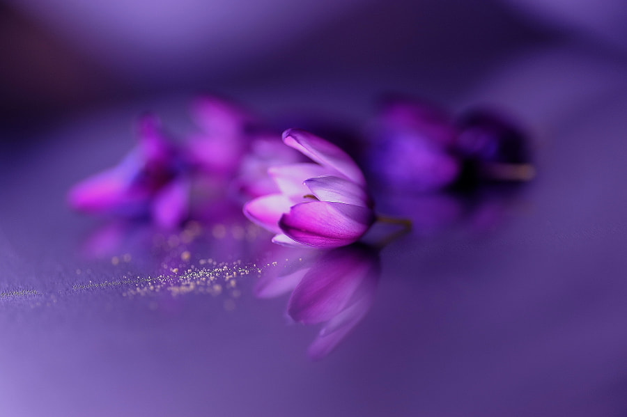 Photograph After the banquet  by Lafugue Logos   on 500px