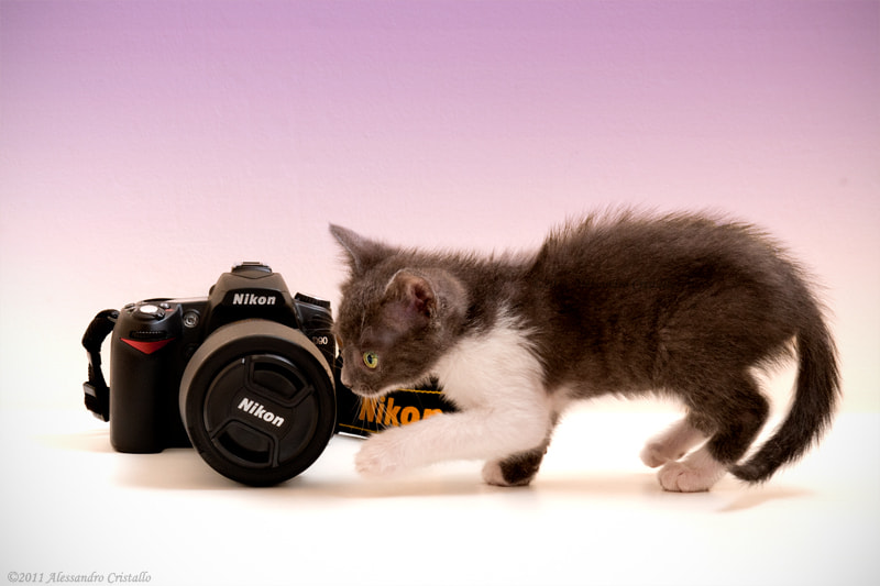 Photograph kittens love camera by Alessandro Cristallo on 500px