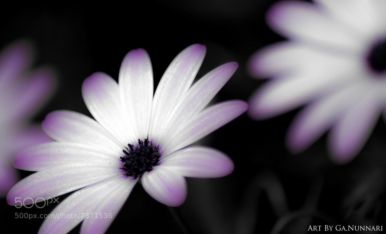 Photograph Snow White by Gabriele Nunnari on 500px