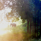 Постер, плакат: wild elephant on a beautiful morning