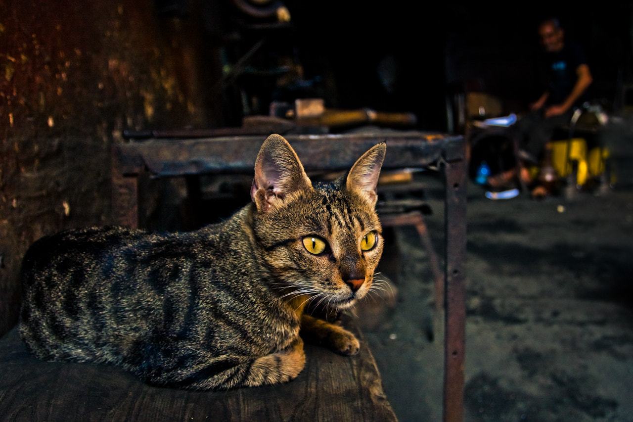 Photograph Cat at the Workshop by Dido EucalipticD on 500px