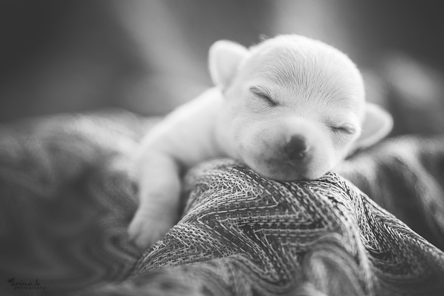 Photograph Sweet Dreams by Arina Kortchov on 500px