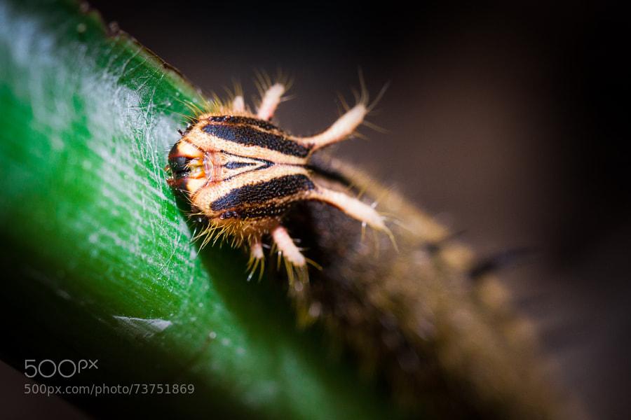 Photograph Caterpillar by Gildas Cuisinier on 500px