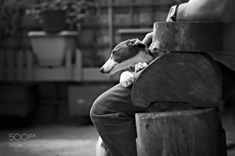 Photograph ** by Kate  Dobiasova on 500px