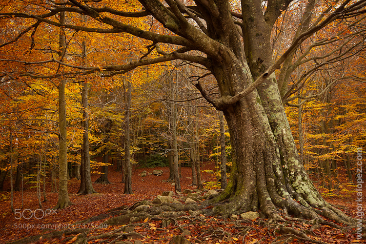 Photograph Montseny essence by Gorka Lopez on 500px
