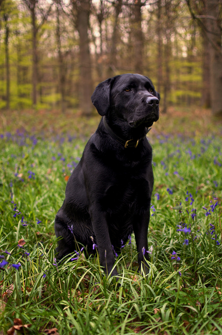 Photograph Dexter by Thom Bartley on 500px