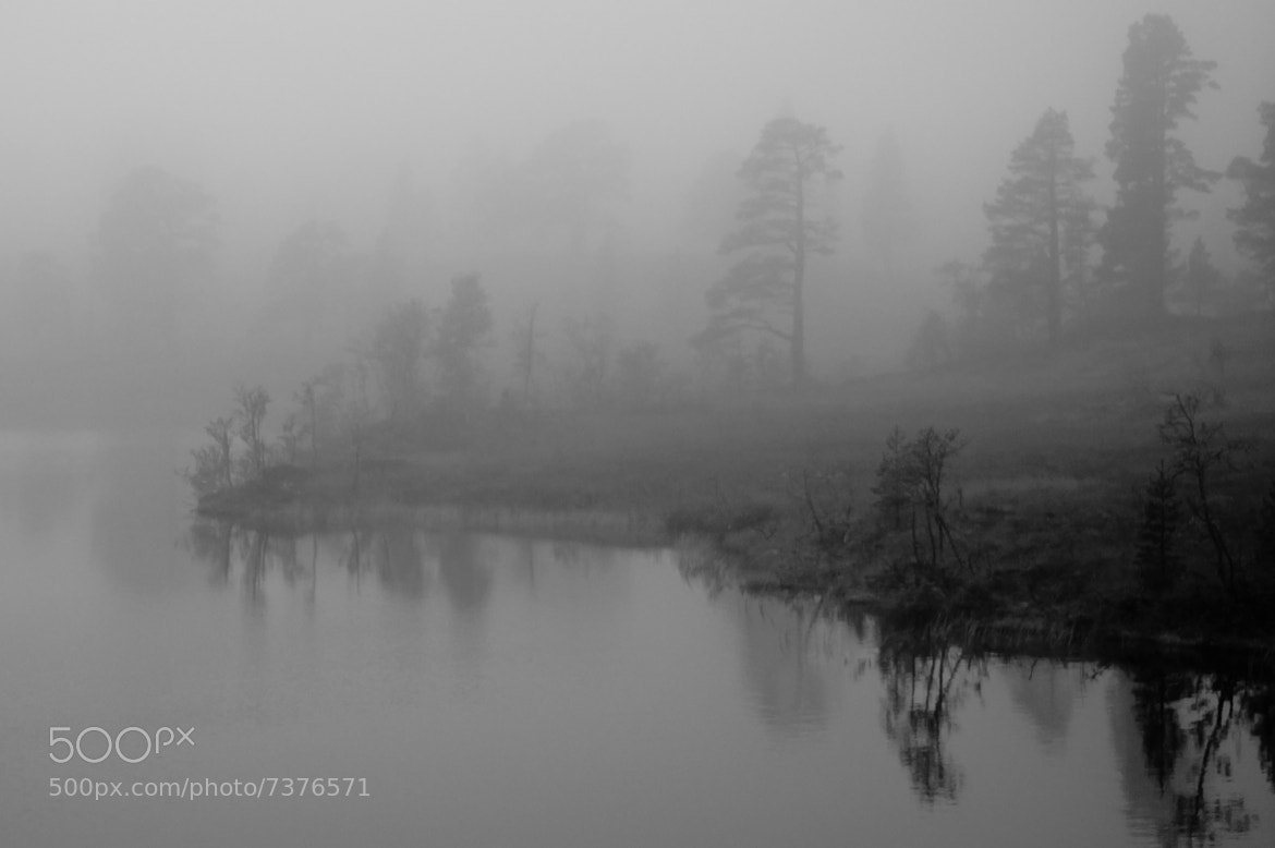 Photograph FoggyMorning by Kolbein Svensson on 500px