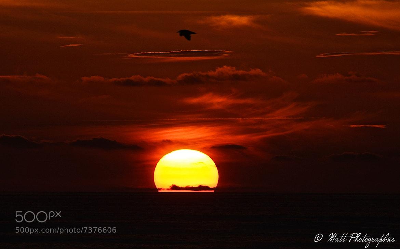 Photograph bird fly on sunset by Matthieu Lucas on 500px