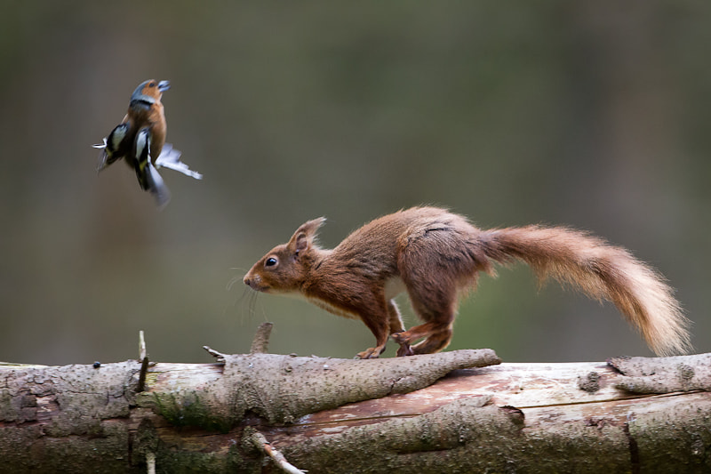 Photograph Air Brakes ON! by Oliver Wright on 500px