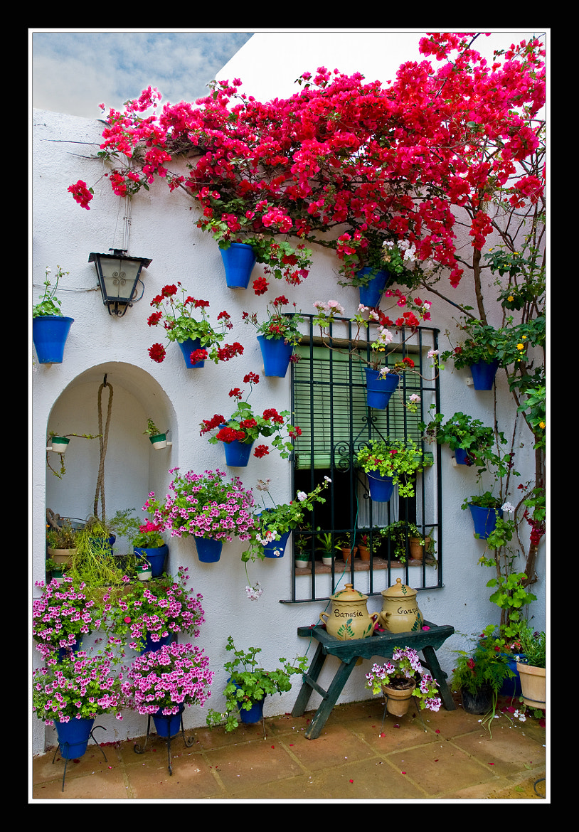Photograph 0202 rincon tipico (patios cordoba). by Jose Gil Paradas on 500px