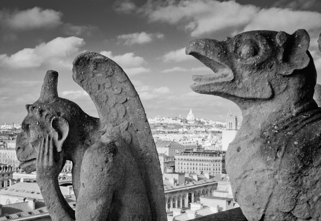 Photograph Henpecked husband (Paris, France) by Stacy Bamon on 500px