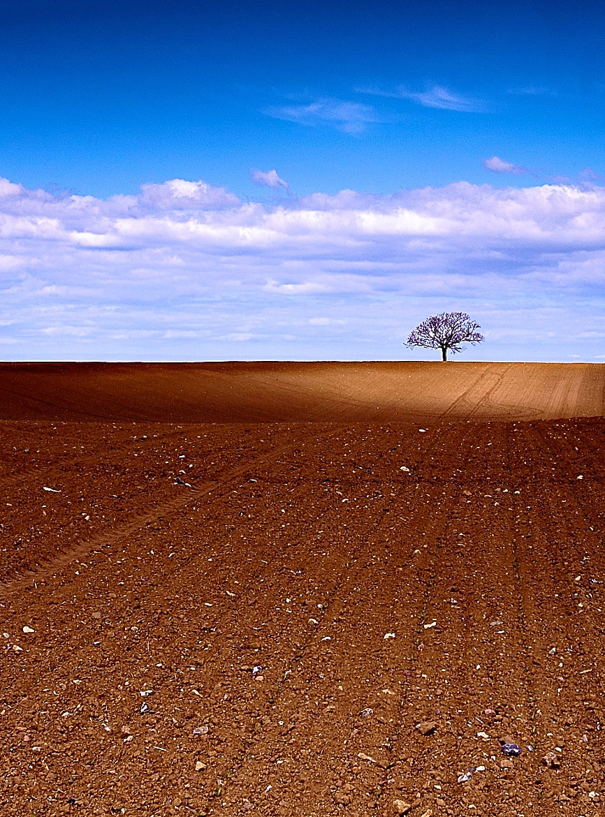 Photograph The Tree by Claus Kjaer on 500px