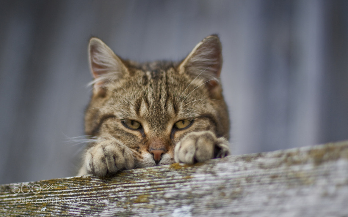 Photograph Kitty Sulk by David van Dyk on 500px