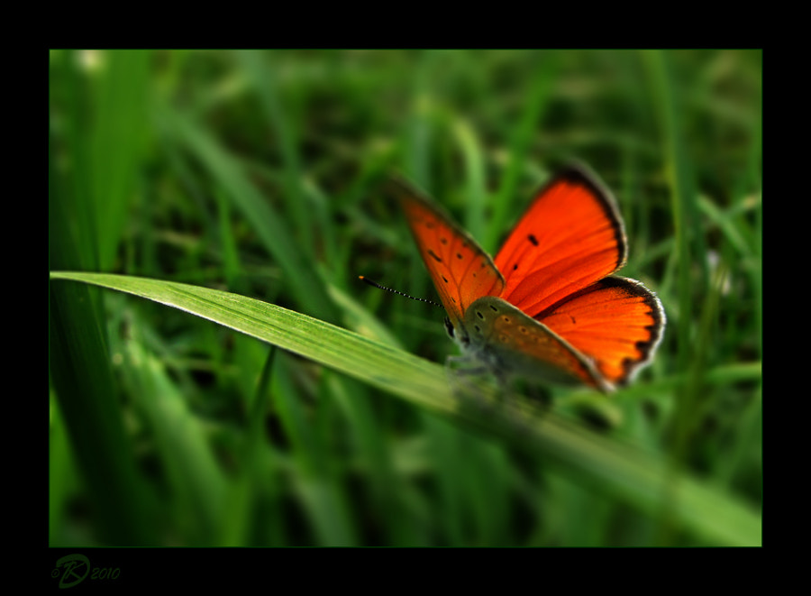 Photograph Butterflies album: 6 by no_gravity * on 500px