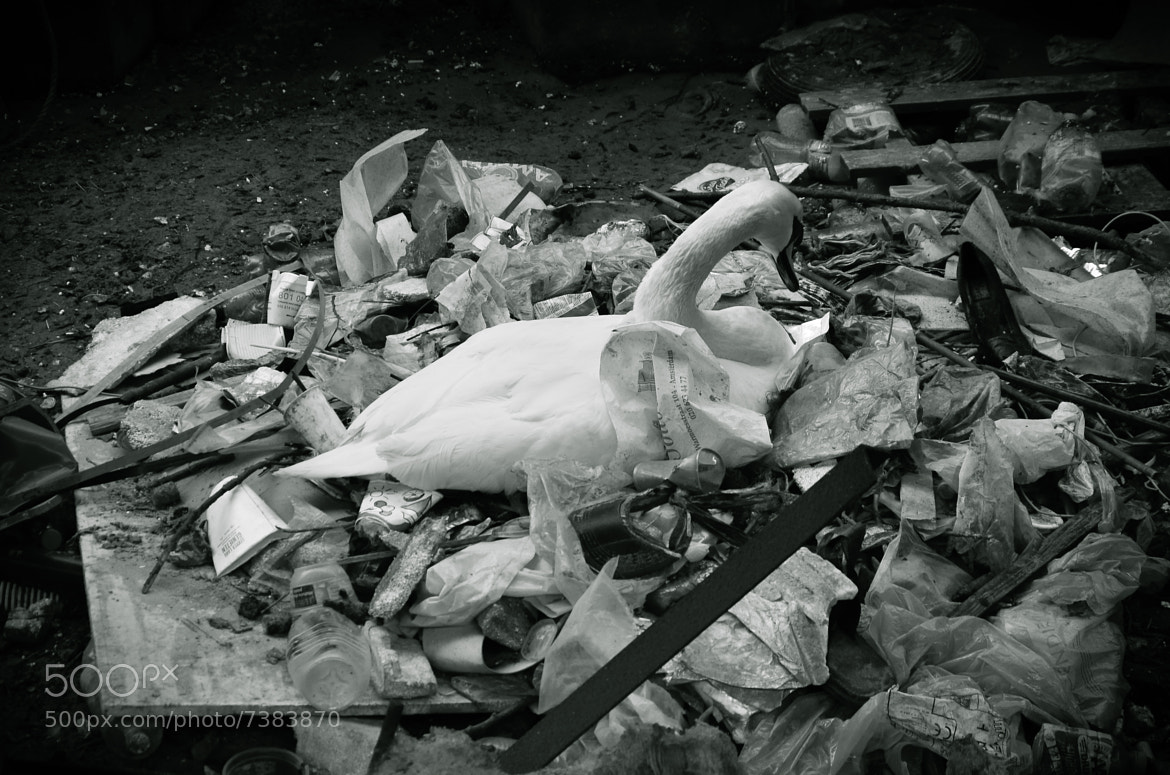 Photograph Garbage Queen by Alin Balanean on 500px