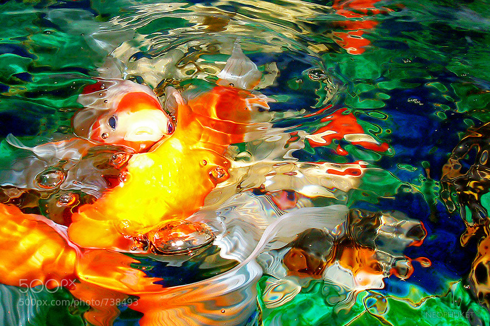 Photograph Goldfish by Neophuket T on 500px