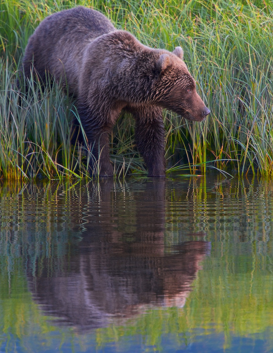 Photograph Just Before The……….. by Buck Shreck on 500px